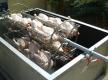 poulets02